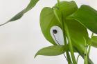 Rostlina s elektrodou