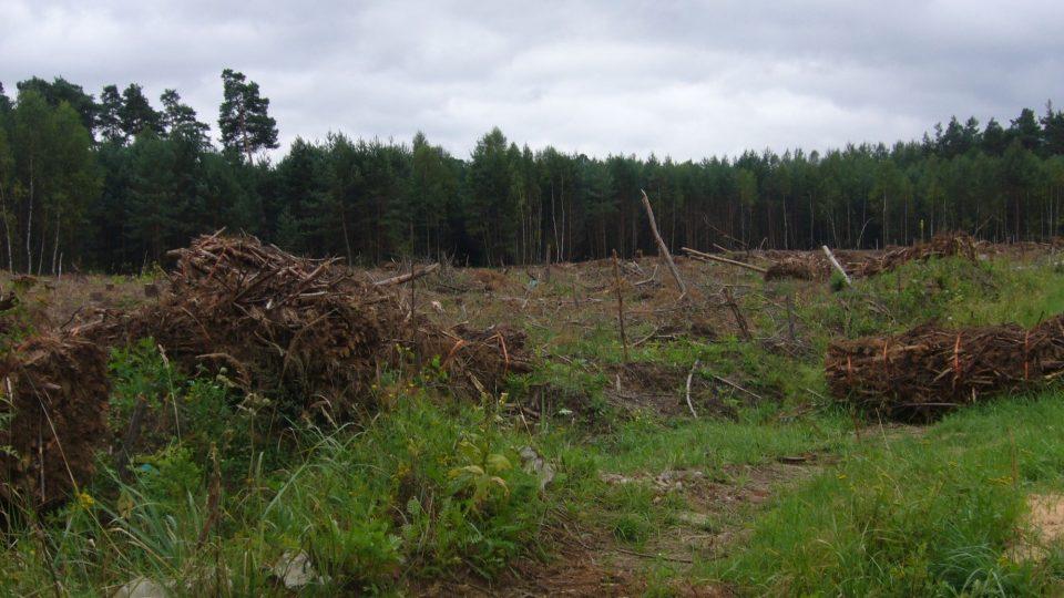 Ralsko - nelegální těžba dřeva