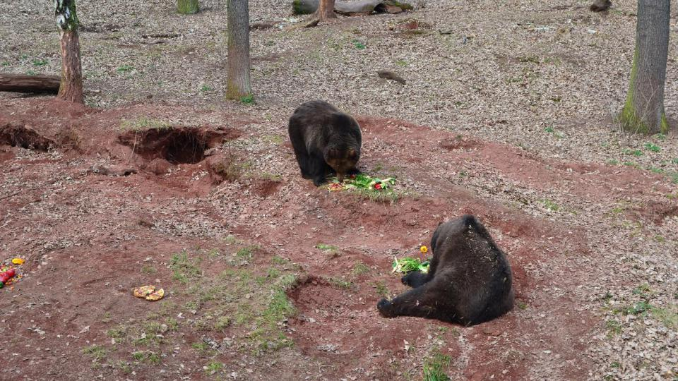 medvědi v chomutovském zooparku