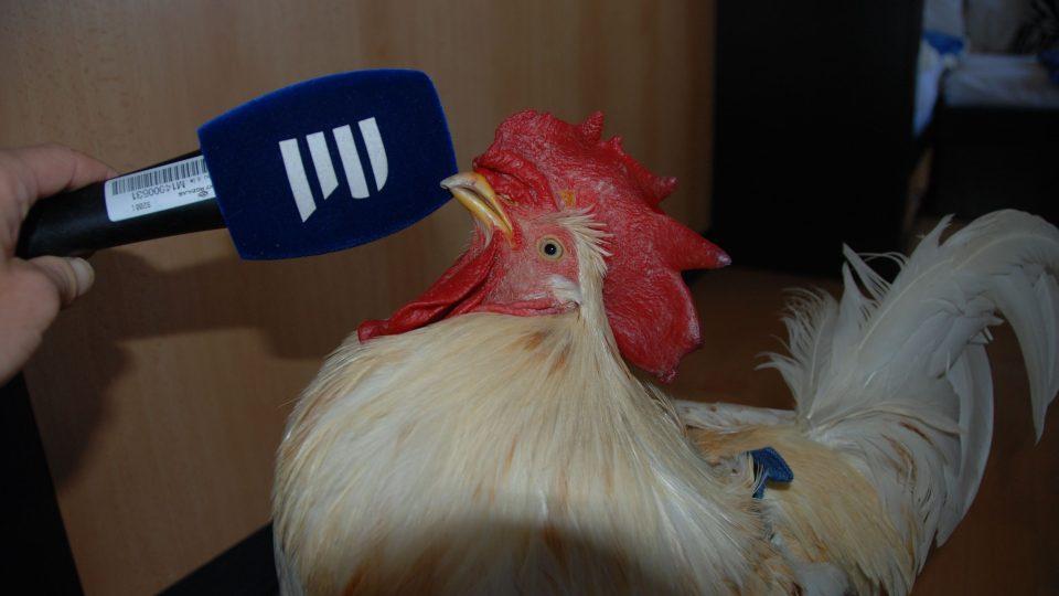 Kohout Pepa u mikrofonu