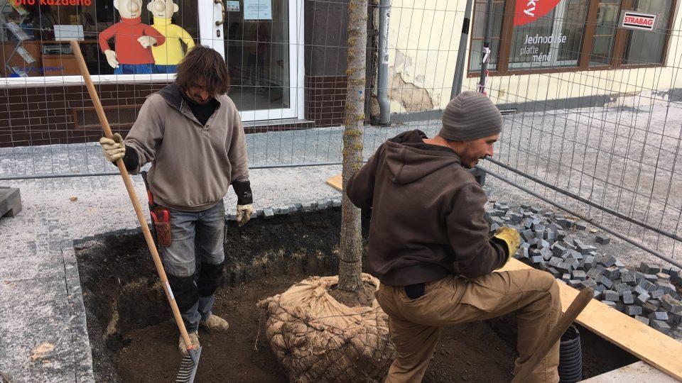 Jilmová alej mění ulici Prokopa Holého v Děčíně k nepoznání