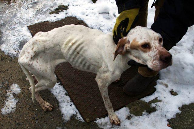 Týraný pes (ilustr. obr.)