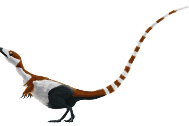 Sinosauropteryx - rekonstrukce pravděpodobného vzhledu