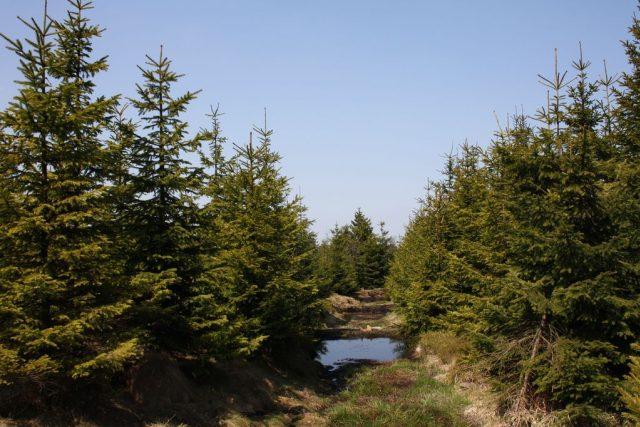 Revitalizované rašeliniště Cínovecký hřbet v Krušných horách