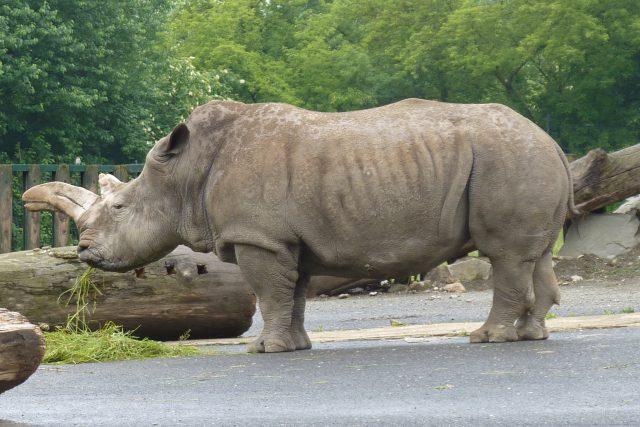 Samička Zamba přišla do ústecké zoo v roce 1980.
