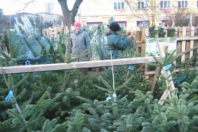vánoční stromky, prodej