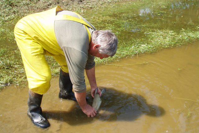 Výlov ryb z povodňových lagun na Mělnicku