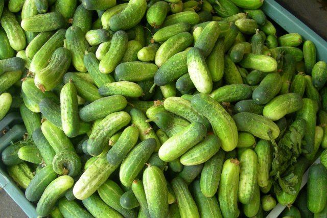 Okurky, nakládání, zelenina