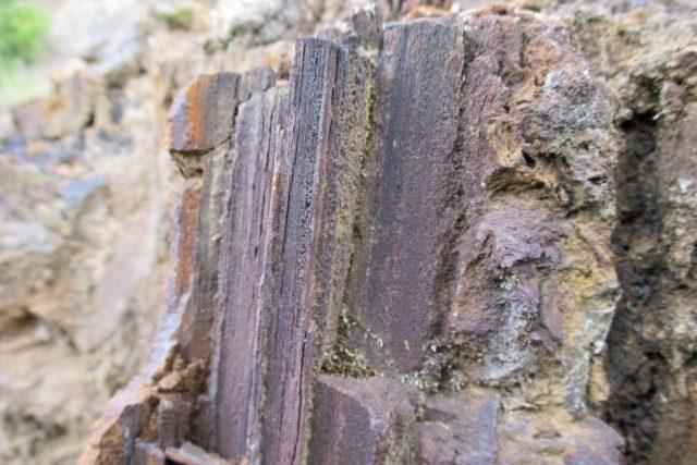 Detail třetihorního dřeva | foto: Pavel Halla