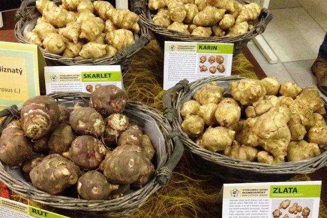 Výzkumný ústav bramborářský představuje na Bramborářských dnech v Havlíčkově Brodě také topinambury