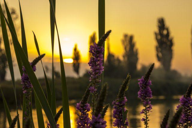 Jezero, květiny (ilustrační foto)