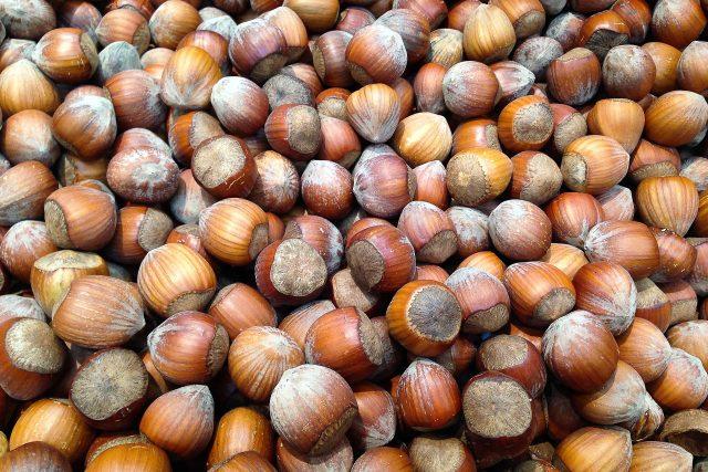 Lískové oříšky, ořechy, líska, jádra