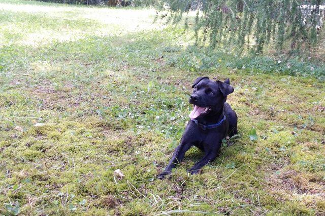 Erik ‒ pes, specializovaný na vyhledávání drog