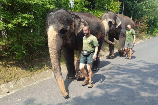 Slonice Kala a Delhi s ošetřovateli na procházce v ústecké zoo