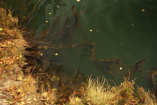 Ilustrační foto - voda se sinicemi