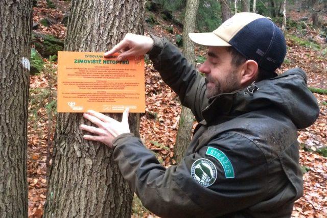 Strážci národního parku České Švýcarsko brání netopýry před bezohlednými návštěvníky jeskyní