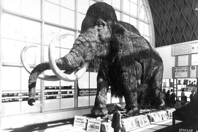 Pohled do hlavní haly Pavilonu Člověk a jeho rod s modelem mamuta   foto: archiv Ústavu Anthropos MZM