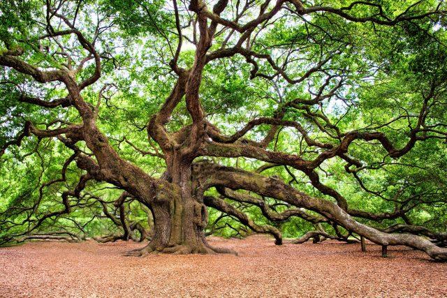Dub je krásný strom. A dá se do něj mluvit jako do dubu