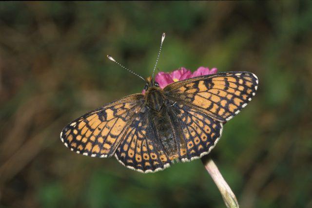 Motýlů rapidně ubývá | foto: Profimedia