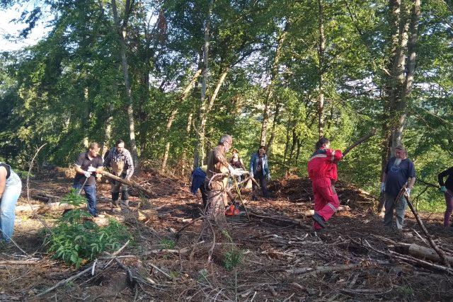 Dobrovolníci uklidili les po kůrovcové těžbě ve Rtyni nad Bílinou
