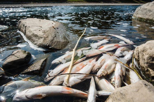Mrtvé ryby v Bečvě, snímek z 21. září 2020