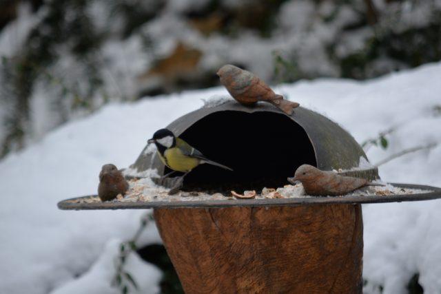 Ústecká zoo pečuje také o volně žijící ptáky