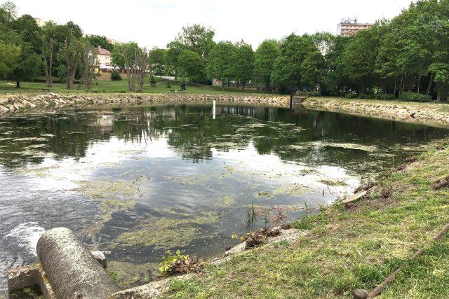 Pilařský rybník v Litvínově