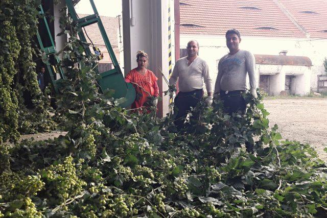Pomocníci při navěšování chmele na česačce v Libočanech | foto: Libor Želinský