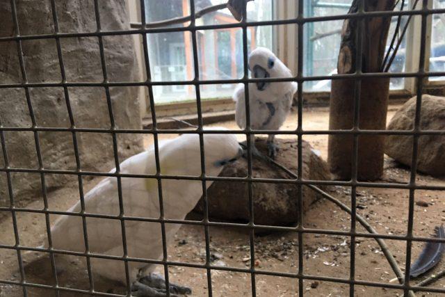 Děčínská zoo schovala všechny ptáky kvůli hrozbě ptačí chřipky do vnitřních ubikací