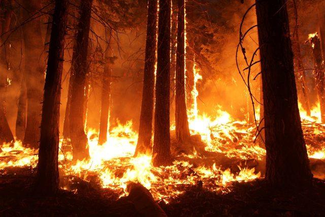 Lesní požár (ilustrační foto)